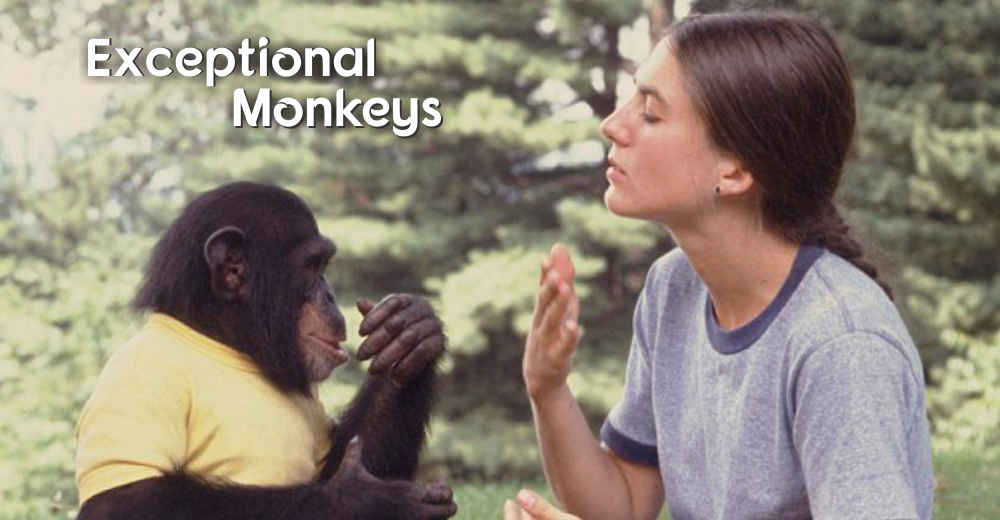 Exceptional Monkeys | Insights Care