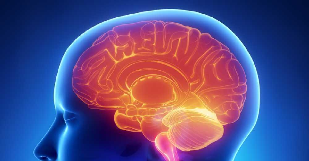 Brain Surgery | Insights Care