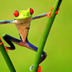 Poisonous Frogs | Insights Care