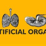ARTIFICIAL ORGANS | Insights Care